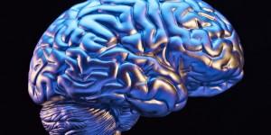 cerebro1-696x348